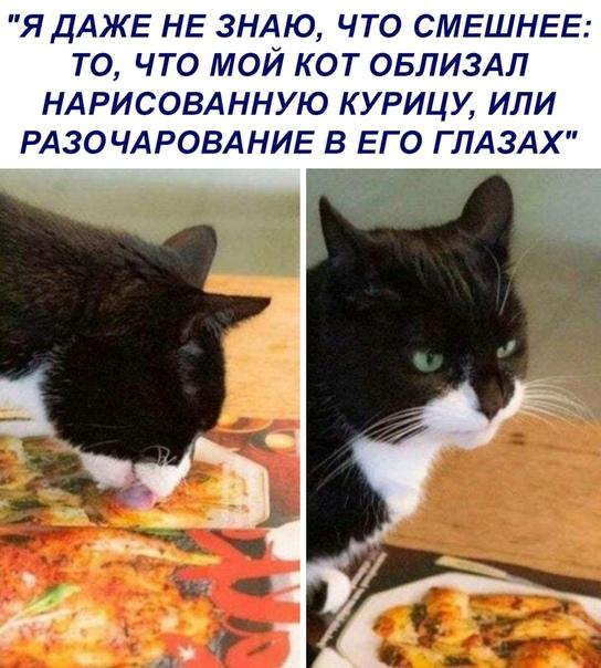 жалко котика