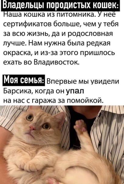 жизнь владивосток кошка