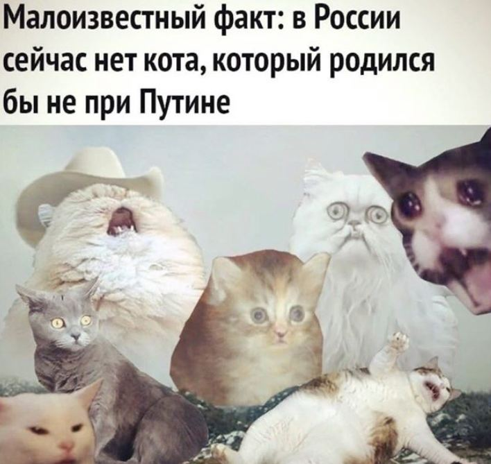 россия путин кот