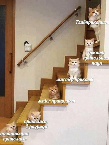 иерархия приколистов