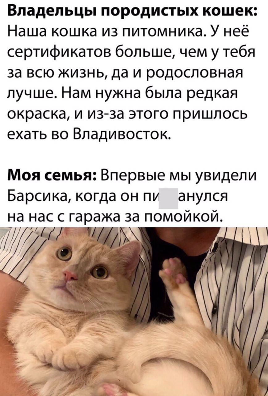 жизнь кошка владивосток