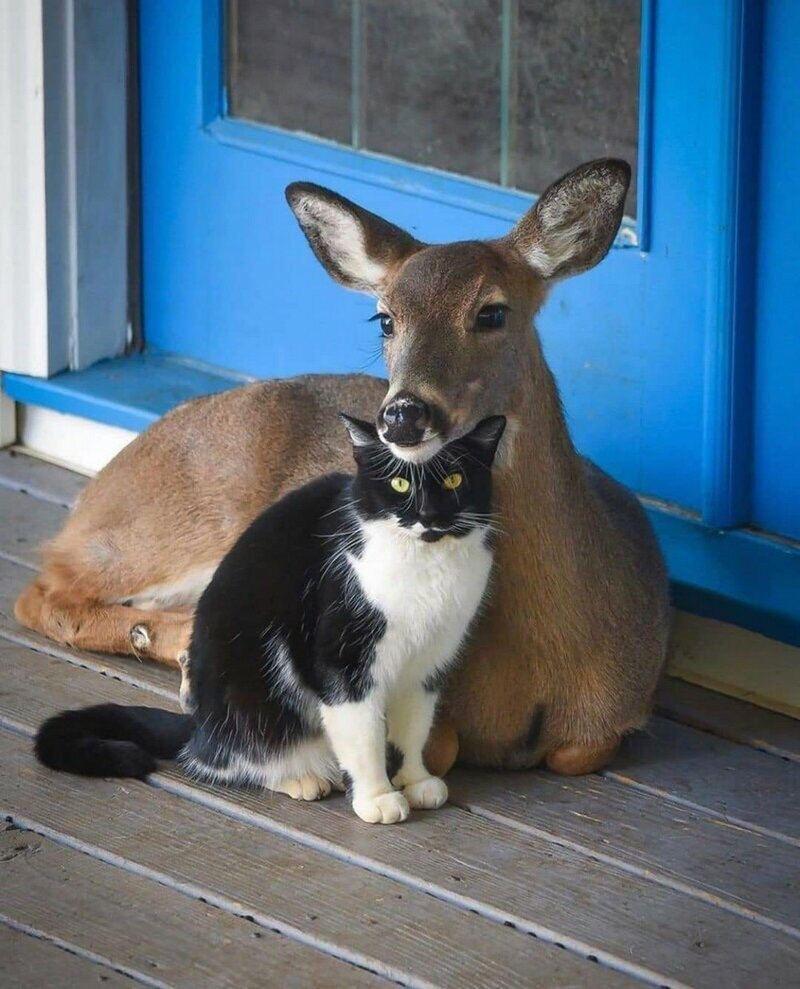 К нашему дому часто приходил олень, позже я сдела…